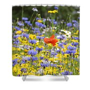 One Red Poppy Amongst The Wildflowers Shower Curtain