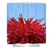 Red Purple Dahlia Flower Art Print Giclee Baslee Troutman Shower Curtain