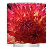 Red Purple Dahlia Flower Summer Dahlia Garden Baslee Troutman Shower Curtain