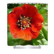 Red Red Bloom Shower Curtain