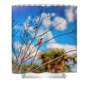 Red Red Robin Shower Curtain
