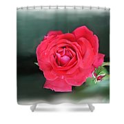 Red-red Rose. Shower Curtain