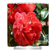 Red Red Roses Shower Curtain