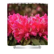 Red Rhododendron Flowers At Floriade, Canberra, Australia. Shower Curtain