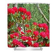 Red Rhododendron Garden Art Prints Rhodies Landscape Baslee Troutman Shower Curtain