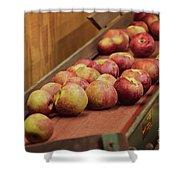 Red Ripe Macintosh Apples Shower Curtain