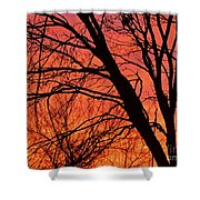 Red Rising Shower Curtain