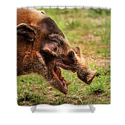 Red River Hog Shower Curtain