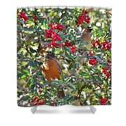 Red Robin And Cedar Waxwing 1 Shower Curtain