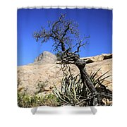 Red Rock Canyon Nv 10 Shower Curtain
