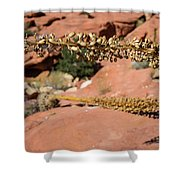 Red Rock Canyon Nv 11 Shower Curtain