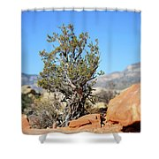 Red Rock Canyon Nv 4 Shower Curtain