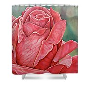 Red Rose 93 Shower Curtain