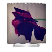 Red Rose Abstract 1 Shower Curtain
