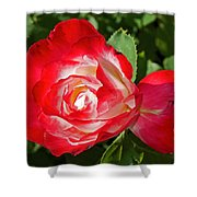 Red Rose And A Sidecar At Pilgrim Place In Claremont-california Shower Curtain