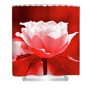Red Rose Beauty Shower Curtain
