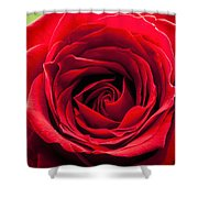 Red Rose Colour Isolated On A Green Background. Shower Curtain