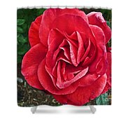 Red Rose F135 Shower Curtain
