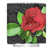 Red Rose For My Lady Shower Curtain