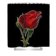 Red Rose II Shower Curtain