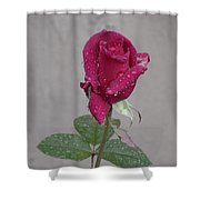 Red Rose In Rain Shower Curtain
