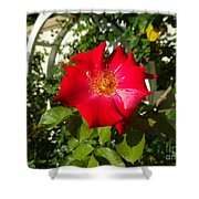 Red Rose In Summer Shower Curtain