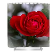 Red Rose Shower Curtain by Issabild -