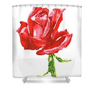 Red Rose Watercolor Painting Shower Curtain