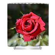 Red Rose Landscape Shower Curtain