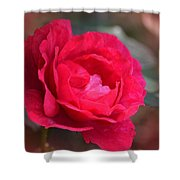 Red Rose Of May Shower Curtain