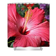 Red Rose Of Sharon  Shower Curtain