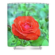 Red Rose On Natural Background With Green Leaves. Shower Curtain