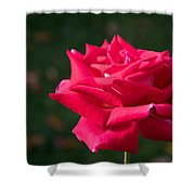 Red Rose Profile Shower Curtain