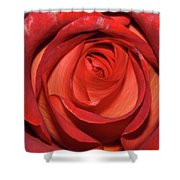 Red Rose Up Close Shower Curtain
