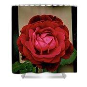 Red Rose  V2 Shower Curtain