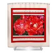 Red Rose With A Whisper Of Yellow And Design Shower Curtain