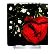 Red Rose With Baby Breath Shower Curtain