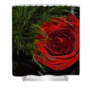 Red Rose With Garnish And Black Velvet Shower Curtain