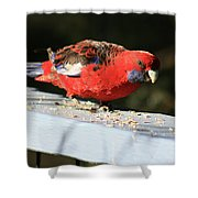 Red Rosella Shower Curtain