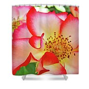 Red Roses White Yellow Rose Flower Floral Art Print Baslee Troutman Shower Curtain