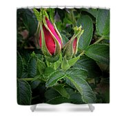 Red Rugosia Bud Shower Curtain
