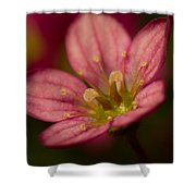 Red Saxifraga Shower Curtain