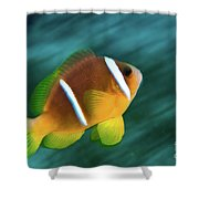 Red Sea Clownfish  Shower Curtain