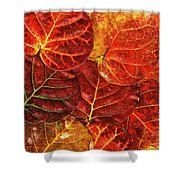 Red Sea Grapes By Sharon Cummings Shower Curtain