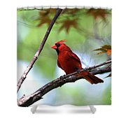Red Sentry Shower Curtain
