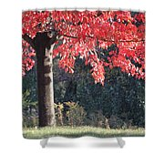 Red Shade Tree Shower Curtain