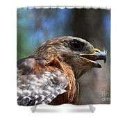 Red Shouldered Hawk - Profile Shower Curtain