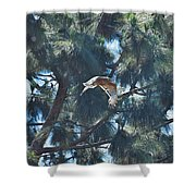 Red Shouldered Hawk Flying Away 1 Shower Curtain