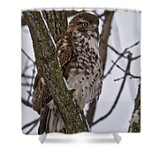 Red Shouldered Hawk - Madison - Wisconsin Shower Curtain