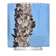 Red Shouldered Hawk On Palm Tree Shower Curtain